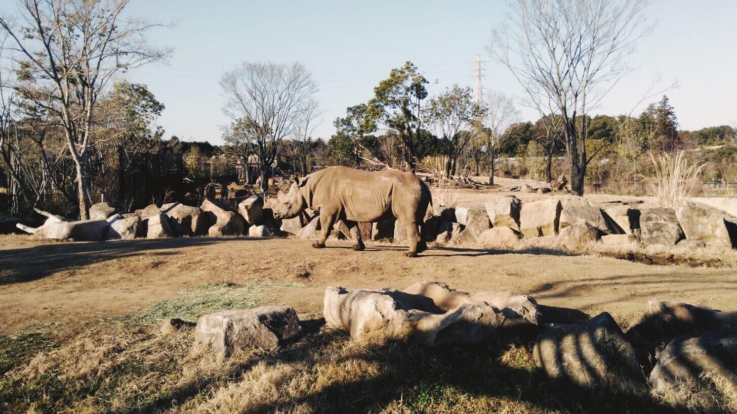 ズーラシア動物園は広い