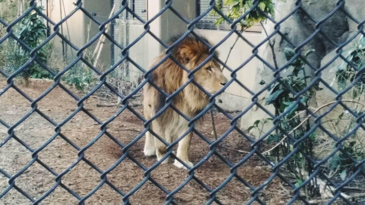 よこはま動物園ズーラシア-14
