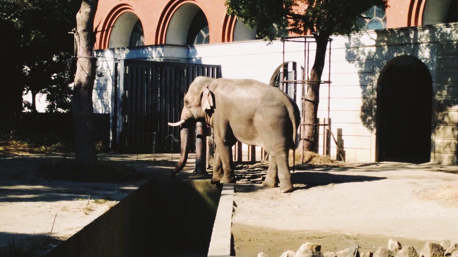よこはま動物園ズーラシア-3